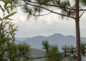 Campsite View
